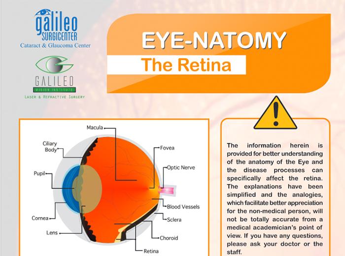Eye-Anatomy of the Retina