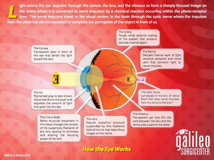 The Anatomy of the Internal Eye
