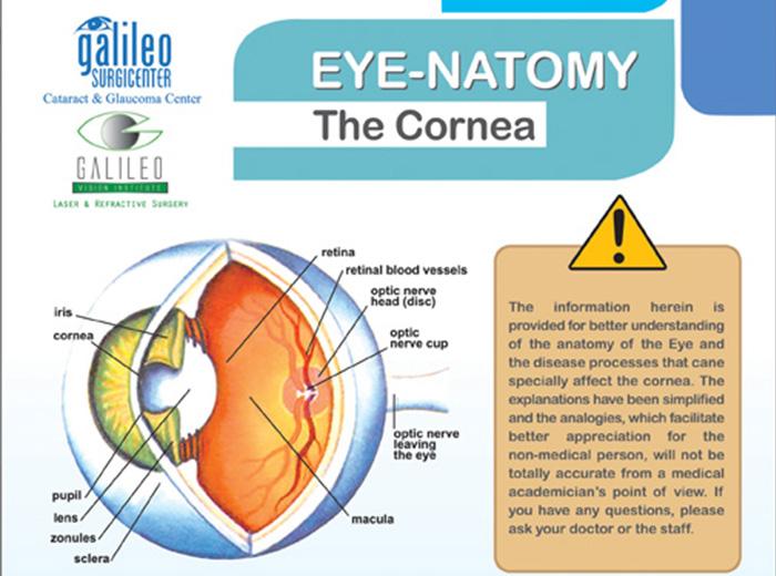 Eye-Anatomy of the Cornea